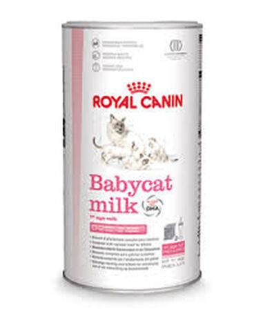 Kattenmelk kitten 300 gram Royal Canin