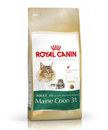 Droogvoer kat maine coon adult 2 kg Royal Canin